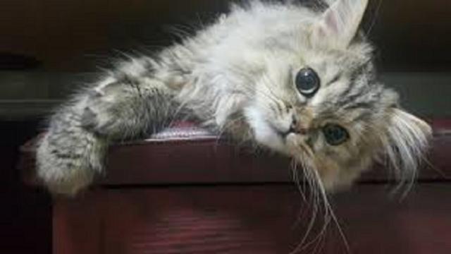 Le chat devient fou après avoir fait ses besoins parce qu'il est heureux mais pas que