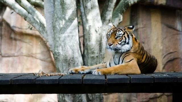 COVID-19 severely hurting global zoos