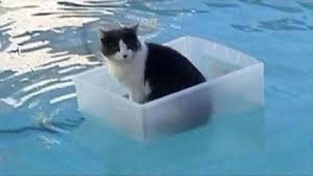 Le chat et l'eau : une histoire pas si désagréable que cela
