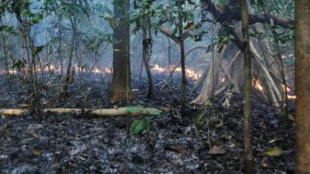 Desmatamento cresce 55% nos primeiros meses de 2020