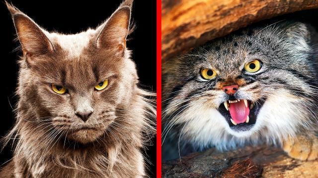 Les chats ne mangent pas leurs nourritures par terre uniquement par instinct