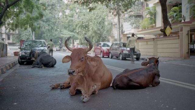 El Tribunal Supremo de Pakistán admite que los animales no-humanos tienen derechos