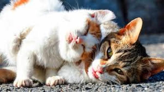 Des disparitions de chats inquiètent une association près de Belfort