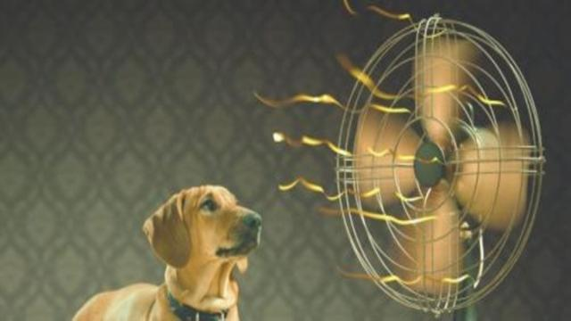 Consejos para evitar en perros golpes de calor durante las altas temperaturas