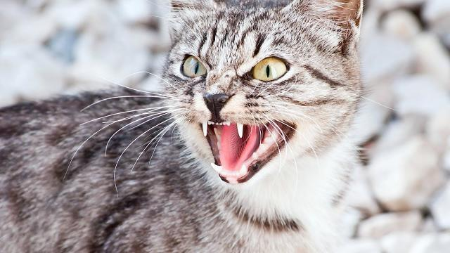 Un chat fait le buzz en s'incrustant dans une vidéo d'une coach sportive