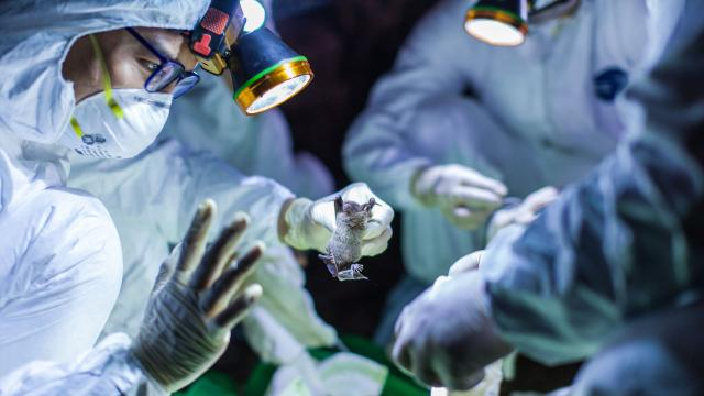 OMS anuncia novo surto de ebola no Congo