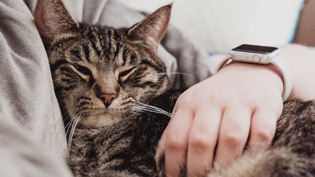 Coronavirus: los gatos son más susceptibles que los perros a contraer la enfermedad