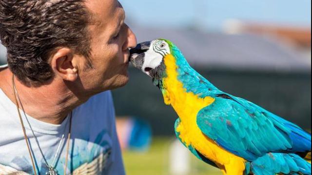 Enzo Salvi: aggredito da un ragazzo in campagna e il suo pappagallo preso a sassate