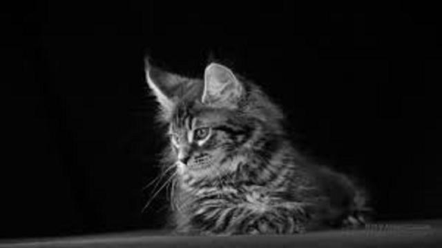 Si votre chat est possessif, ce n'est pas forcément de la jalousie