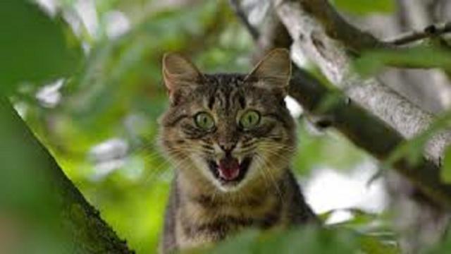 Si votre chat est distant après votre absence, ce n'est pas uniquement par vengeance