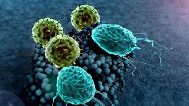 Un estudio sostiene que entre el 20% y el 50% de la población es inmune al coronavirus