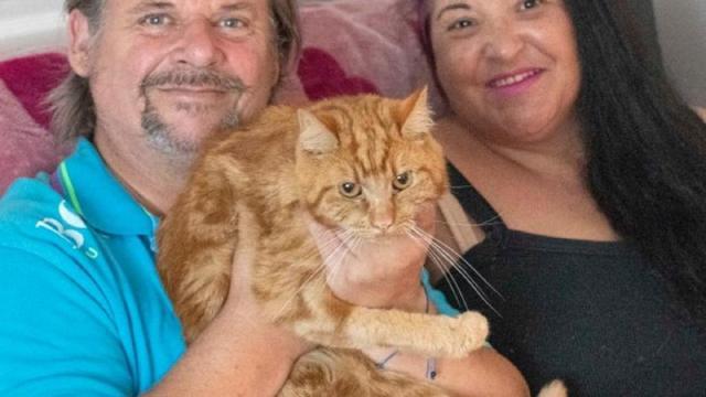Regno Unito, gatto affidato in adozione percorre 64 km per tornare dai vecchi proprietari