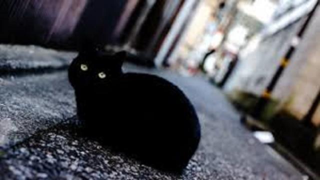 Sauver une vie ou bon caractère, les raisons pour lesquelles adopter un chat noir
