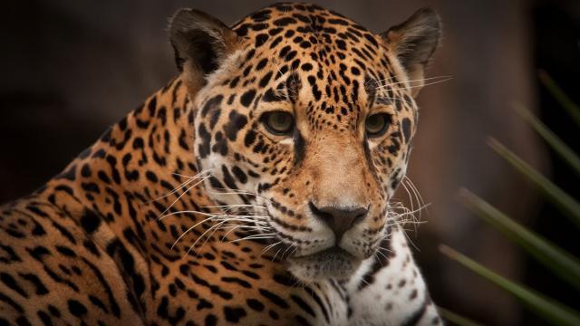 5 animais que correm risco de extinção no Pantanal por causa das queimadas