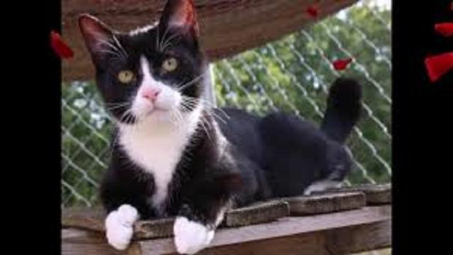 De l'arthrose à la teigne, les dangers qui guettent votre chat en automne