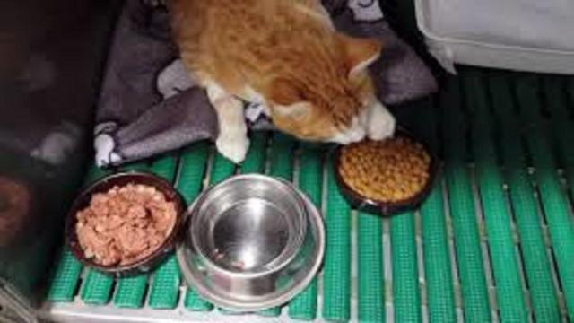 Nourrir son chat une seule fois par jour serait bénéfique