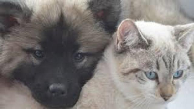 La nouvelle vidéo sur l'abandon des animaux fait le buzz sur les réseaux sociaux