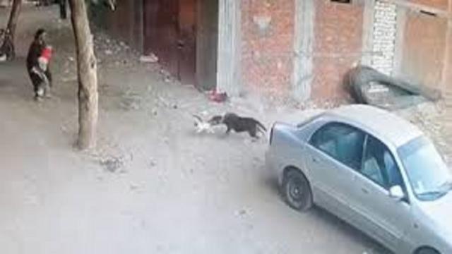 Un chat vient au secours d'un enfant attaqué par un chien