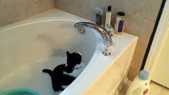 La salle de bain, entre espace frais et parc d'attractions pour votre chat