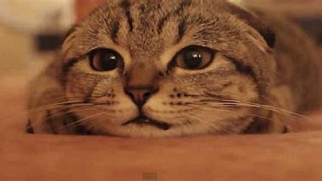 Un chat égaré passe Noël à plus de 1500 km de chez lui avant de retrouver son domicile
