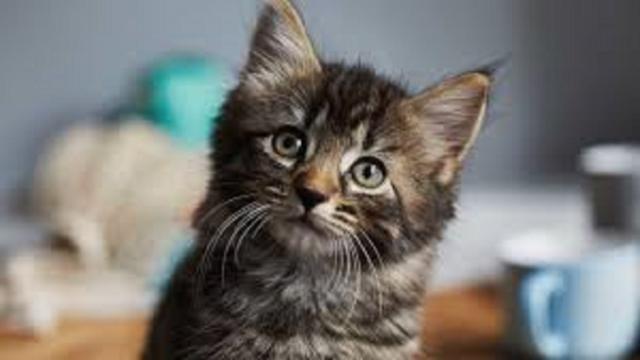 Protection des animaux : des sanctions plus lourdes et un certificat avant adopter