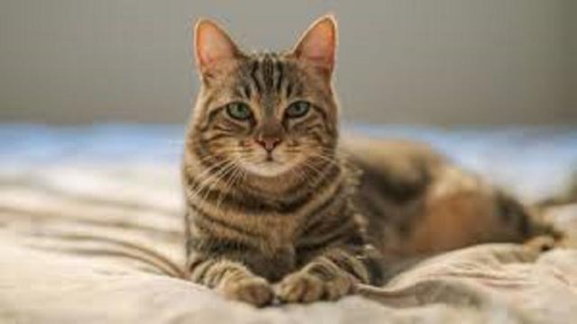 Rio, le petit chat qui cherche une famille
