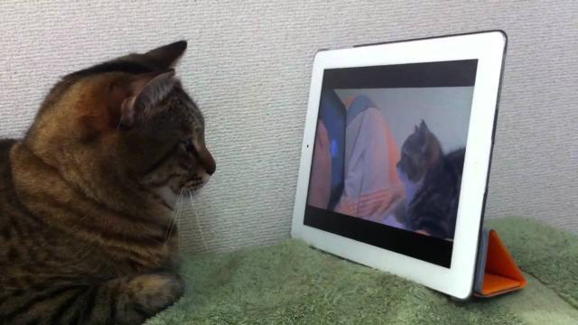 Turquie : une chatte emmène son chaton chez le vétérinaire