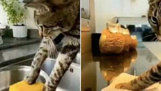 La vidéo d'un chat qui nettoie la maison de fond en comble fait le buzz