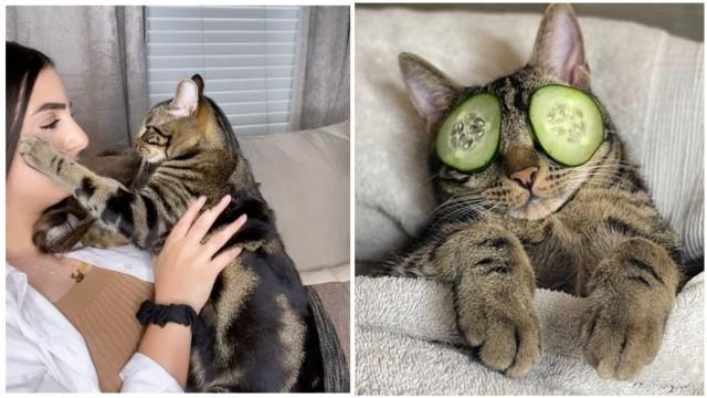 La vidéo de ce chat qui empêche sa propriétaire d'appeler un autre matou devient virale