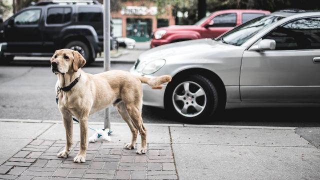 Les internautes surpris par ce chien qui fauche un homme à toute allure tel une voiture