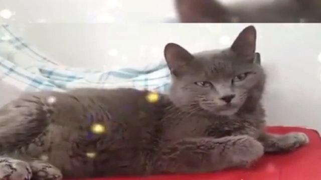 Uomini e Donne, Gemma ricorda la dipartita del suo adorato gatto