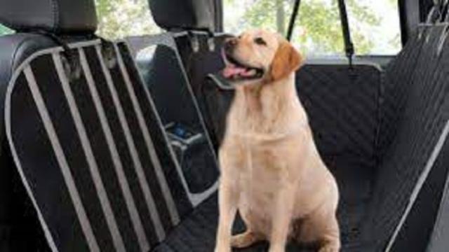 Une femme vient au secours d'un chien enfermé dans la voiture de son maitre