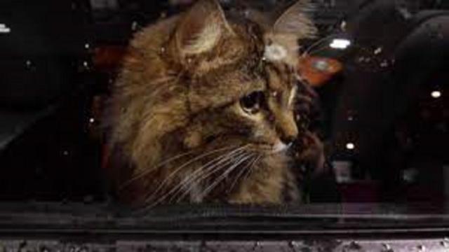 Elle se démène pour sauver un chat enfermé dans une voiture